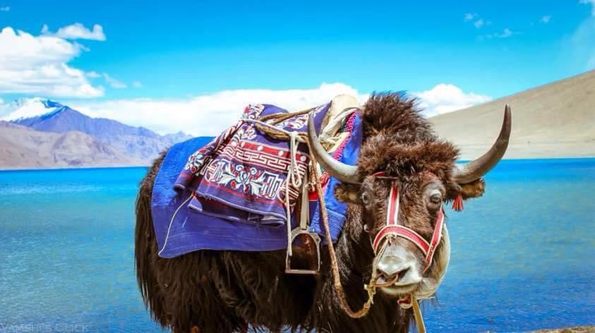 6 Days Leh Ladakh Trip